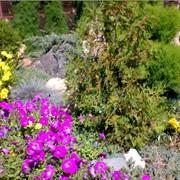 Услуги мобильного садовника фото