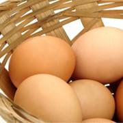 Яйца куриные диетические фото