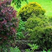 Озеленение территорий №1 фото