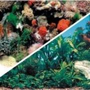 Фон для аквариума фото