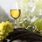 Вина виноградные фото