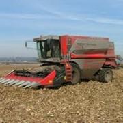 Жатки для уборки кукурузы Dominoni