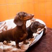Гостиница для собак Hotel4DOG фото