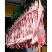Мясо свинины полутуши охлажденное, купить мясо фото