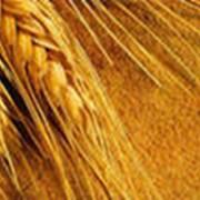 Переработка гречихи и пшеницы фото