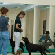 Хендлинг - подготовка собак к выставкам фото