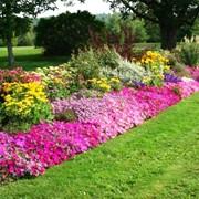 Проектирование ландшафта сада, ландшафтный дизайн фото