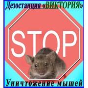 Борьба с мышами, дезинфекция, дезинсекция, дератизация, в Алматы