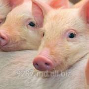 Свинина купить в Молдове фото