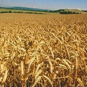 Услуги хранения сельскохозяйственных культур фото