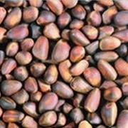 Кедровые орехи фото