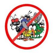 уничтожение тараканов (наличие гос.лицензии)