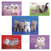 Альбом для рисования, 24 л., Хатбер, спираль, обложка мелованный картон, 100 г/м2, Милые котята (5 видов) фото