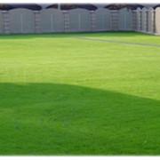 Обыкновенные газоны фото