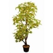 Искусственное дерево Клен Раби (Код товара: 43935) фото