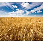 Зерно Трейд Азия, Зерновые продукты фото