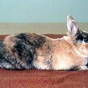 Премиксы для домашних животных фото