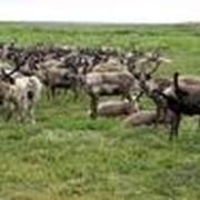 Страхование домашнего скота и породистых животных фото