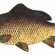 Корма для рыб и черепах фото