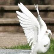 Лечение птиц