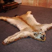 Изготовление ковров из шкур животных фото