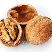 Орехи грецкие Молдова фото