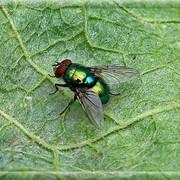 Уничтожение мух, Дезинсекция, Дезстанция Надежда и К, ТОО, Мухи, уничтожение мух, борьба с мухами фото