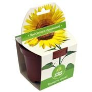 Подсолнух Happy Plant наборы для выращивания фото