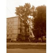 Вырубка деревьев в городе фото
