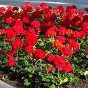 Устройство цветников и клумб №6 фото