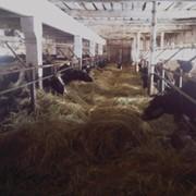 Сельскохозяйственное предприятие фото