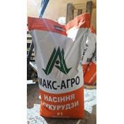 Гибрид кукурузы СОЛОНЯНСКИЙ 298 СВ фото