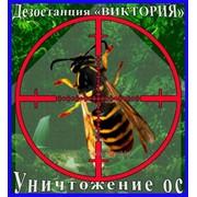 Уничтожение ос и осиных гнёзд в Алматы и области. Дезостанция «ВИКТОРИЯ» фото