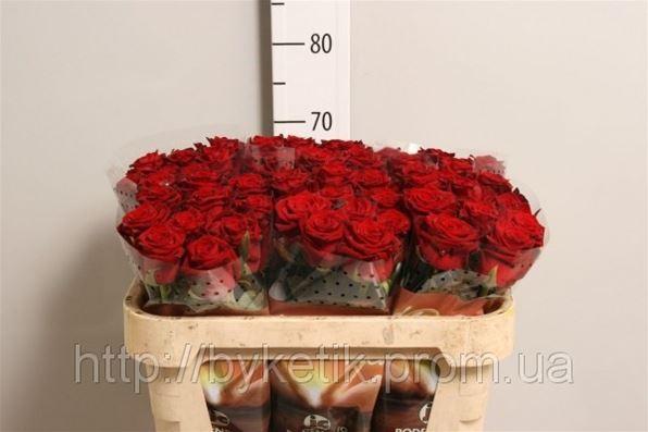 Живые цветы опт киев купить цветы в харькове каллы