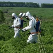 Уничтожение нежелательной растительности гербицидами фото