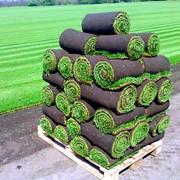 Выращивание рулонных газонов в Молдове фото
