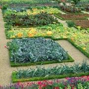 Ландшафтный дизайн сада и огорода фото
