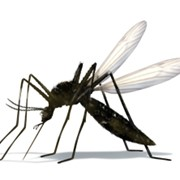 Уничтожение насекомых в Сургуте фото