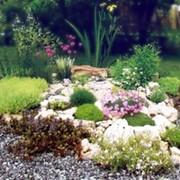 Устройство цветников из многолетних и однолетних травянистых растений фото