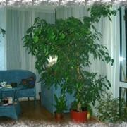 Озеленение интерьеров фото