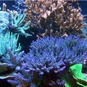 Перевозка аквариумов при переселении фото