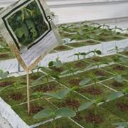 Субстрат «Урожайный фото