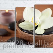 Модульна картина на полотні Біла орхідея код КМ80106-098 фото