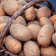 Картофель отборный фото