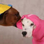 Товары для животных, зоотовары Товары для собак фото