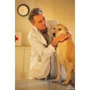 Лечение животных фото