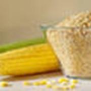 Зародыш кукурузный фото