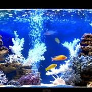 Профессиональный уход за аквариумами фото