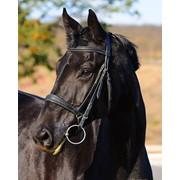 Спортивный конь Форель фото