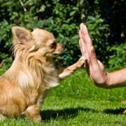 Дрессировка собак, корректировка поведения фото